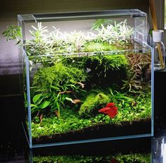 81 Best Tropical Fish Tank Ideas images in 2019 | Fish tank ...