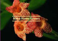 Kohleria  Cybele Orange Flowers, Colorful Flowers, Orange Color, October Flowers, Home Flowers, Christmas Ornaments, Holiday Decor, Flowers, Christmas Jewelry