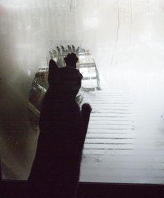 Feline window washer