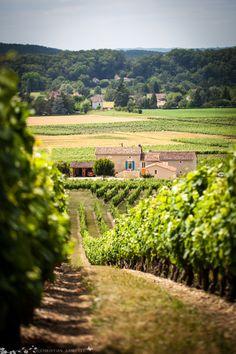 Wijnranken in de Lot Vallei, Frankrijk