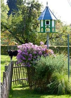 Painted dovecote, rustic picket fence and Aster novae-angliae