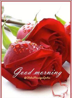 Good Morning Rose Images, Good Morning Flowers Pictures, Good Morning Love Messages, Good Morning Roses, Good Morning Image Quotes, Good Morning Picture, Beautiful Morning, Good Morning Gift, Good Morning Greetings