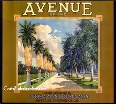 Victoria Avenue Citrus Association, Riverside, California