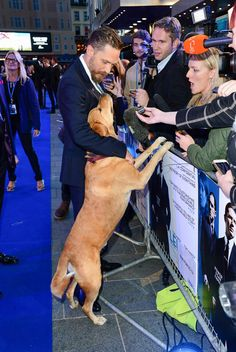 Love that Tom Hardy brought his rescue dog, Woody, to his Legend film premier, London. Sept 2015.