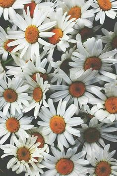 Daisies Margaridas - Wallpaper tumblr