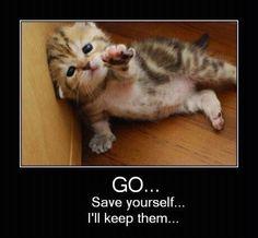 Poor kitteh,lol