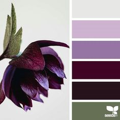 Next Previous Flora Tones by way of jessica colaluca, design seeds. An analogous color palette could possibly be created with our Heritage & Colonial Chalky End units. Color Schemes Colour Palettes, Colour Pallette, Color Palate, Color Combos, Burgundy Colour Palette, Purple Hues, Red Purple, Design Seeds, Ocean Colors