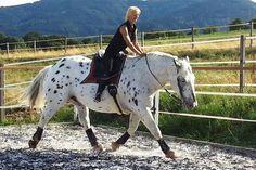 Die Losgelassenheit ist das Fundament in der Pferdeausbildung, und beschreibt einen psychisch und physisch völlig spannungsfreien Zustand. Gedankengänge von wahren Pferdemenschen und gratis Ebook zum Download.