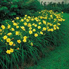 Organic Gardening Tips Daylily Garden, Easy Care Plants, Gardening Zones, Sun Perennials, Garden Bulbs, Low Maintenance Landscaping, Front Yard Landscaping, Landscaping Ideas, Mulch Landscaping