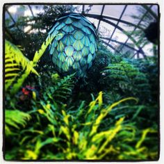 .@pippiecar (Phillippa Carnemolla) 's Instagram photos - She is a finalist in the NSW Premiers Public Service Awards. Service Awards, Public Service, Royal Botanic Gardens Sydney, Sydney Australia, Botanical Gardens, Sculpture, Gallery, Beautiful Things, Plants
