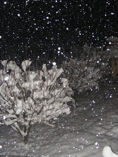 Winter Snow Fall Night - Public Domain Photos, Free Images for Commercial Use