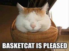 Basket-cat