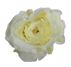 David Austin Patience rose- ivory/buttery center garden rose-Mayesh Wholesale Florists - Search our Flower Library