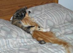 weird sleeping cats | They also spend a lot of time sleeping on each other.