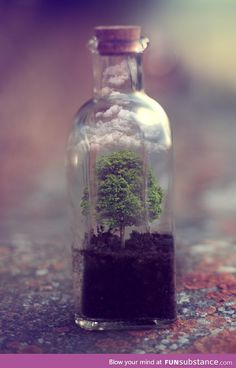 writing prompt: Mini worlds. What if you could buy a world in a jar, to sprinkle on some long dead planet and bring it new life? what sort of world would you make? would it be for you?