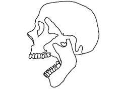 Afbeeldingsresultaat voor skull outline