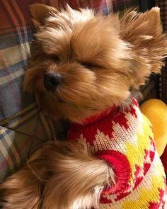 Depois de um dia super agitado brincando com meus amigos no parque, chegou a hora de dar aquele soneca