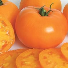 Possibly the best early-season orange tomato. A LARGE SIZE CHERRY, orange-skinned tomato with juice-filled pulp that has a nice, rich flavor. Fruit are quite uniform in growth Determinate. Types Of Tomatoes, Tomato Types, Types Of Oranges, Online Plant Nursery, Buy Plants Online, Planting Shrubs, Tomato Seeds, Tomato Garden, Tomatoes