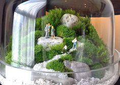 Terrarium Scene Miniature Terrarium, Small Terrarium, Terrarium Plants, Succulent Terrarium, Micro Garden, Mini Fairy Garden, Fairy Gardens, Terrarium Scene, Plants In Bottles