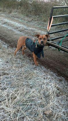 Catch dog! Hog Hunting, Future, Dog, Pets, Animals, Diy Dog, Future Tense, Animales, Animaux