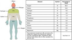 Dentaltown - Almost of the mass of the human body is made up of six elements. - Niche World Shares Carl Sagan, Isotopes Of Hydrogen, Planetary Model, Particles Of Matter, Element Symbols, Chemical Reactions, Big Muscles, Online Library, Astrophysics