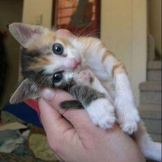かわいすぎてなんだかもうあざといレベルです。 : 【かわいすぎか】妖精みたい!パステルミケってどんな猫??【天使】 - NAVER まとめ