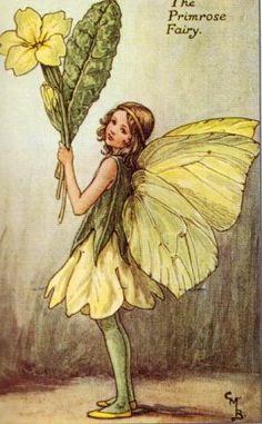 18...................................................................... The Primrose Fairy