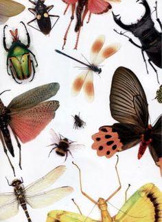 expo «Le monde des insectes» du 25/04 au 31/10/2015 - 1500 insectes exposés qui appartiennent au musée d'art et d'histoire - hotel beurnier-rossel qui ont 22 000 spécimens- Montbéliard