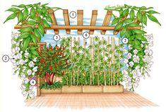 Organizzare piante in terrazzo freddo d inverno e caldo d'estate