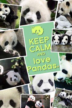 Keep calm and love pandas <3