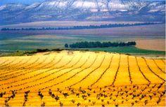 CVC. Paisajes de España. Imágenes de Castilla-La Mancha. Don Quixote, Yahoo Images, Places Ive Been, Image Search, Planets, Vineyard, Spain, Travel, Outdoor