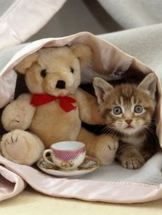 Kitty tea party with Mr. bear with the red bow #cattea