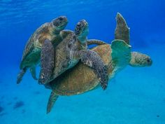 """""""There is a profound peace found only in non-reactivity. """"    ~  Brian Thompson   * Sea Turtles   <3 lis"""