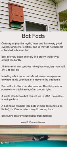 The Truth About Bats -- #bats #bathouse
