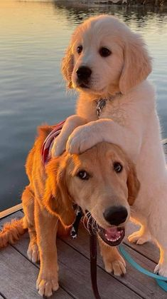 Baby Animals Super Cute, Cute Baby Dogs, Cute Dogs And Puppies, Cute Little Animals, Doggies, Cute Pups, Adorable Animals, Cute Dogs Images, Cute Animal Pictures
