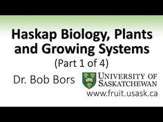 Haskap in Canada, Haskap Berry Haskap BC High Mountain Farm | Educational Haskap Video's