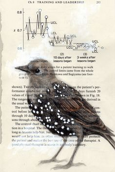 """Paula Swisher - Studio: """"Starling Spots"""" - Paula draws birds on paper and recycles, searches for the perfect page to match the qualities of each bird species"""