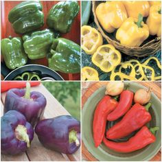 We're sure you'll enjoy this colourful collection of Sweet Peppers. They will certainly make a dazzling addition to your salads and stir-fries. Pepper Seeds, Bulb Flowers, Stuffed Sweet Peppers, Grow Your Own, Popular Pins, Fries, Vegetables, How To Make, Collection