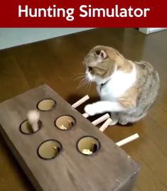Funny cats toys pets lovers - If you are looking for the best device to help you raise a well-trained, healthy cat with sharp hun - Funny Animal Videos, Cute Funny Animals, Cute Baby Animals, Animals And Pets, Funny Cats, Funny Videos, Diy Cat Toys, Pet Toys, Homemade Cat Toys