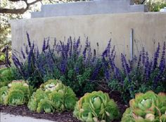 Amazing Succulent Front Yard Landscaping Ideas and Pictures 3