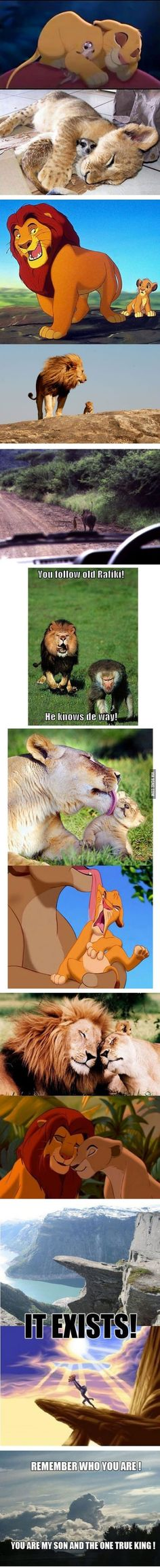 Funny pictures about The Lion King in real life. Oh, and cool pics about The Lion King in real life. Also, The Lion King in real life. Disney Pixar, Disney E Dreamworks, Disney Amor, Disney Love, Disney Magic, Walt Disney, Disney Stuff, Disney Characters, Humour Disney
