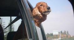 Amaba viajar, fue un gran copiloto!