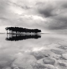 Pine Trees, Study 3, Wolcheon, Gangwondo, South Korea, 2011 - Micheal Kenna