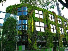 In questo caso si tratta di un edificio interamente verde. Il Musée du Quai Branly con il suo rigoglioso giardino pensile a tutta facciata progettato dal paesaggista Patrick Blanc.