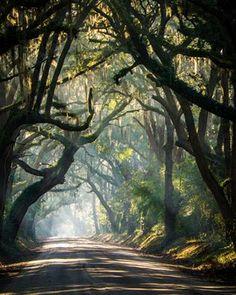 """Esse caminho """"encantado"""", é uma estrada rural no estado da Carolina do Sul, nos Estados Unidos"""