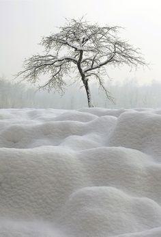 ☃ Winter white ☃