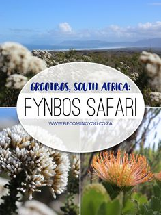 On a visit to Grootbos, South Africa be sure to enjoy the Fynbos Safari – it's the ideal way to experience a morning of natural miracles, and another check ofd that travel bucket list! Photography Pics, Nature Reserve, Professional Photography, Africa Travel, Family Travel, South Africa, Traveling By Yourself, Safari, Travel Destinations