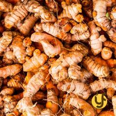 The rhizomes are sliced before drying to reduce drying time and improve the quality of the final product. The rhizomes are sliced by hand or machine. Raw Turmeric, Fresh Turmeric Root, Shelf Life, Sun Dried, Health And Nutrition, Meat, Food, Powder, Benefits Of Chia Seeds