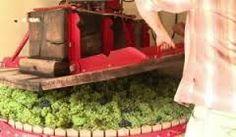 vendanges vertes bordeaux