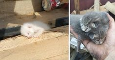 Man Hears Kittens Meowing, Spends 7 Hours Digging In Dumpster To Save Ditched Litter Of Furballs | Bored Panda
